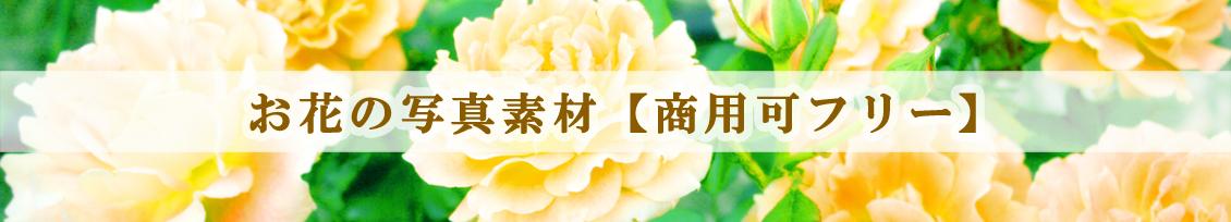 """お花写真素材"""""""